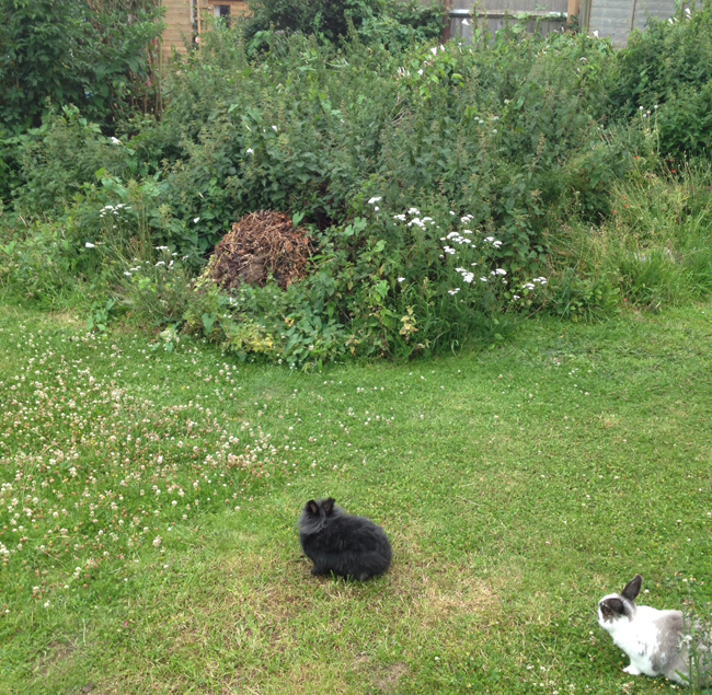 Moppy and Ozzy surveying the site where my wildlife pond will go
