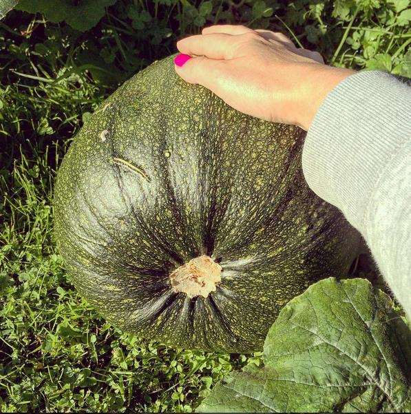 Bertha my knucklehead pumpkin