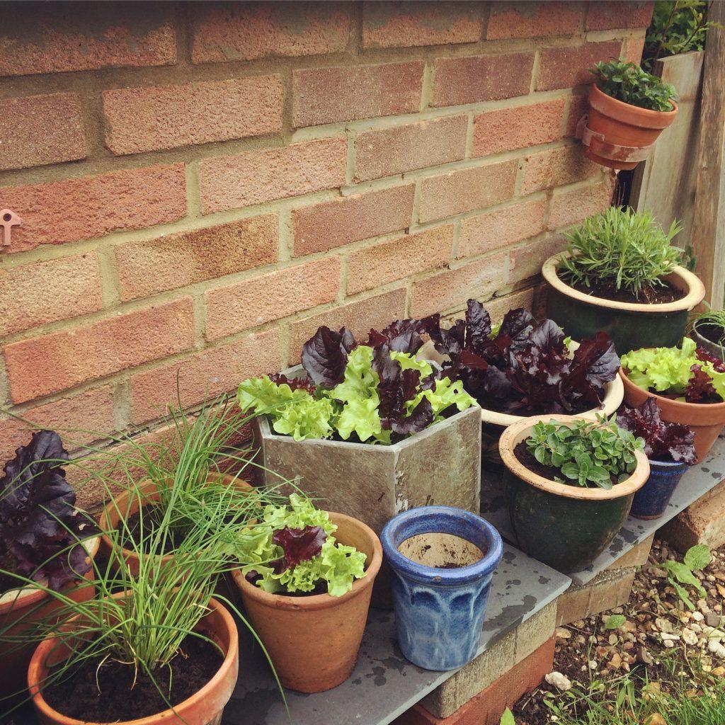 Container Garden Smallest Smallholding