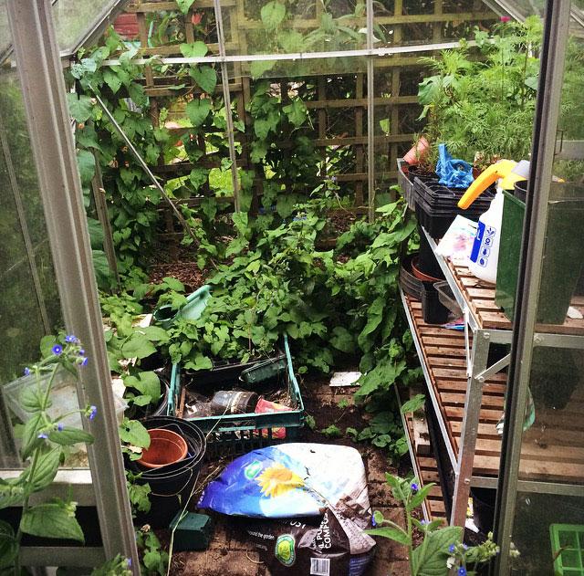 Untidy-Greenhouse