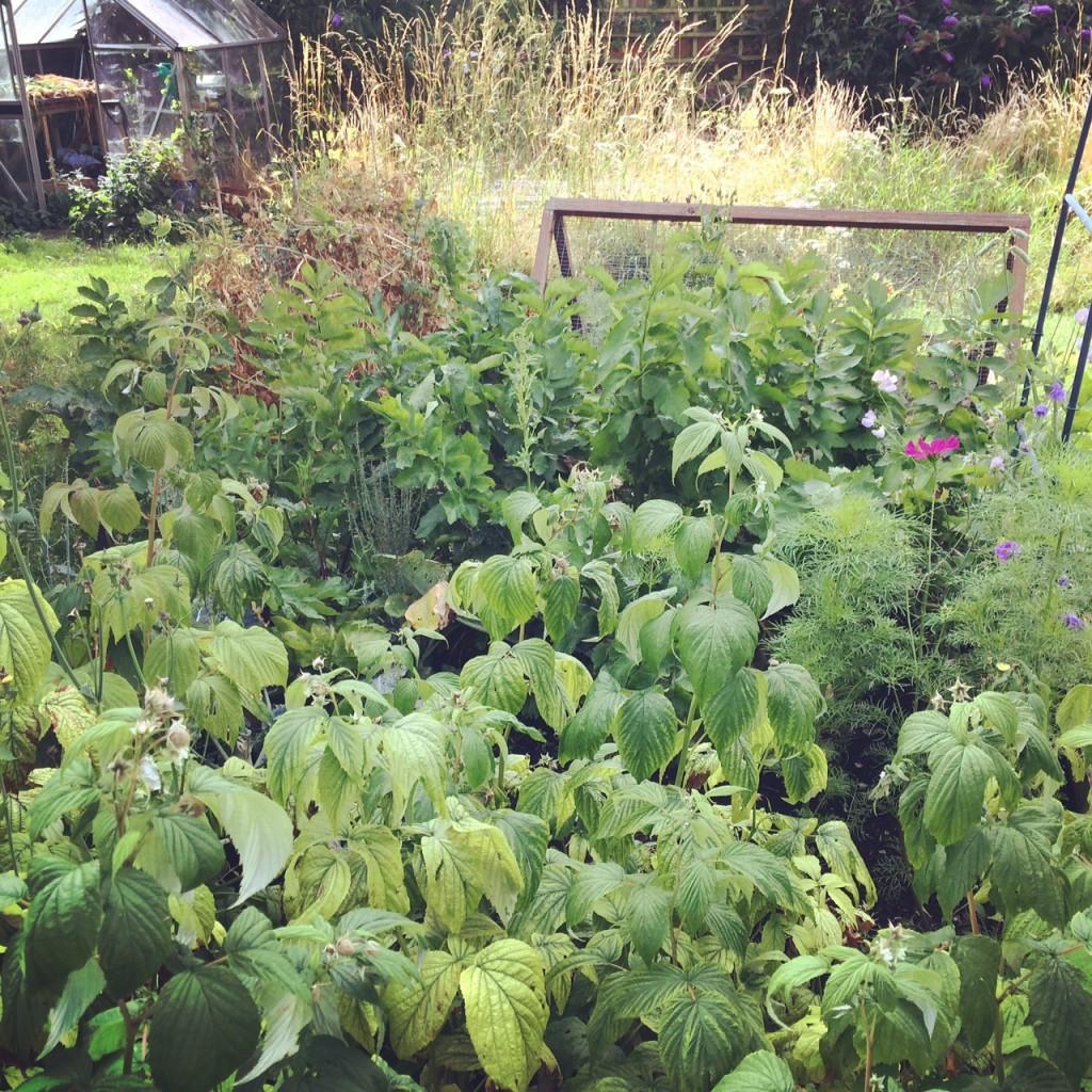 Large veg patch