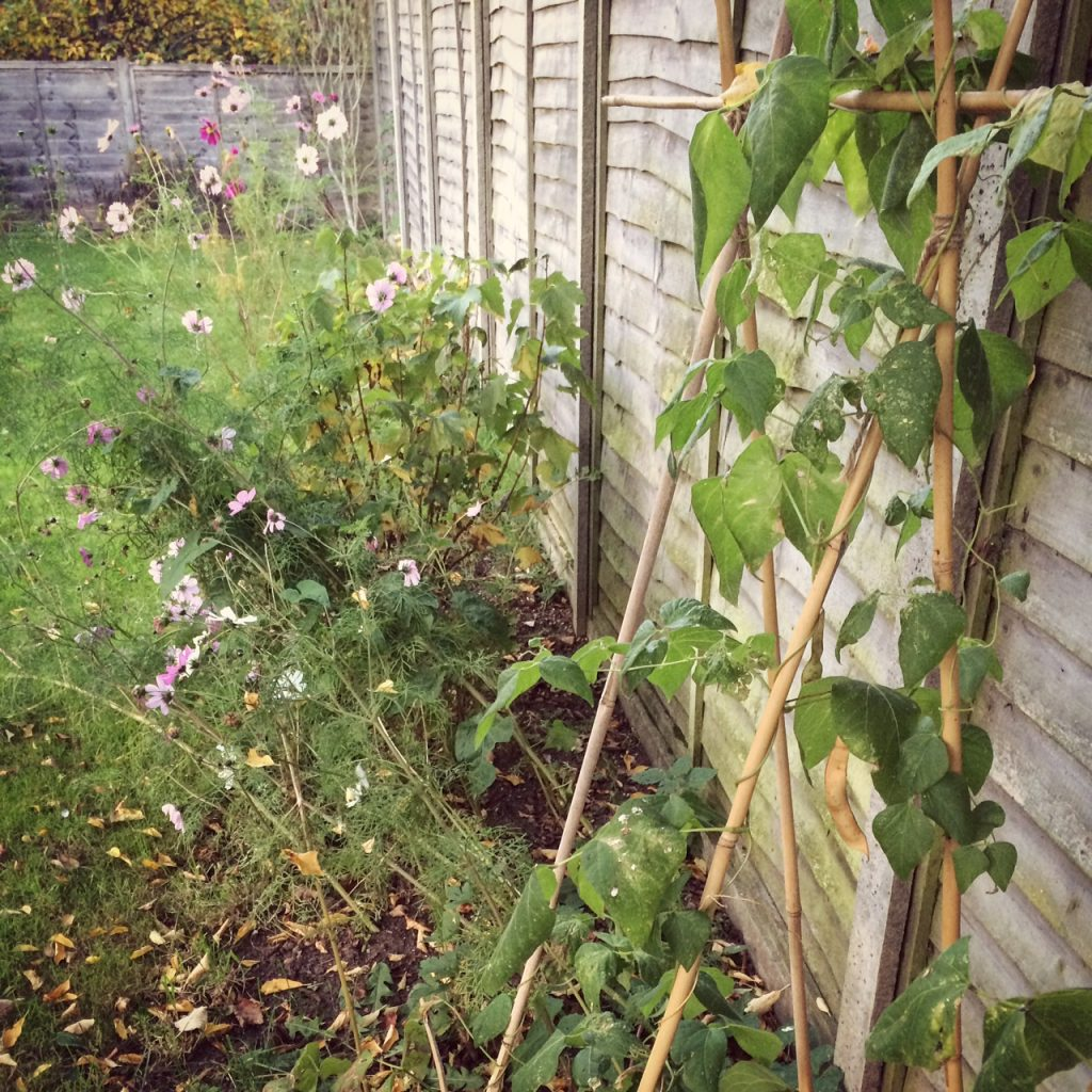 Veg and flower border