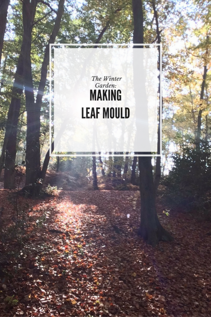 How to Make Leaf Mould