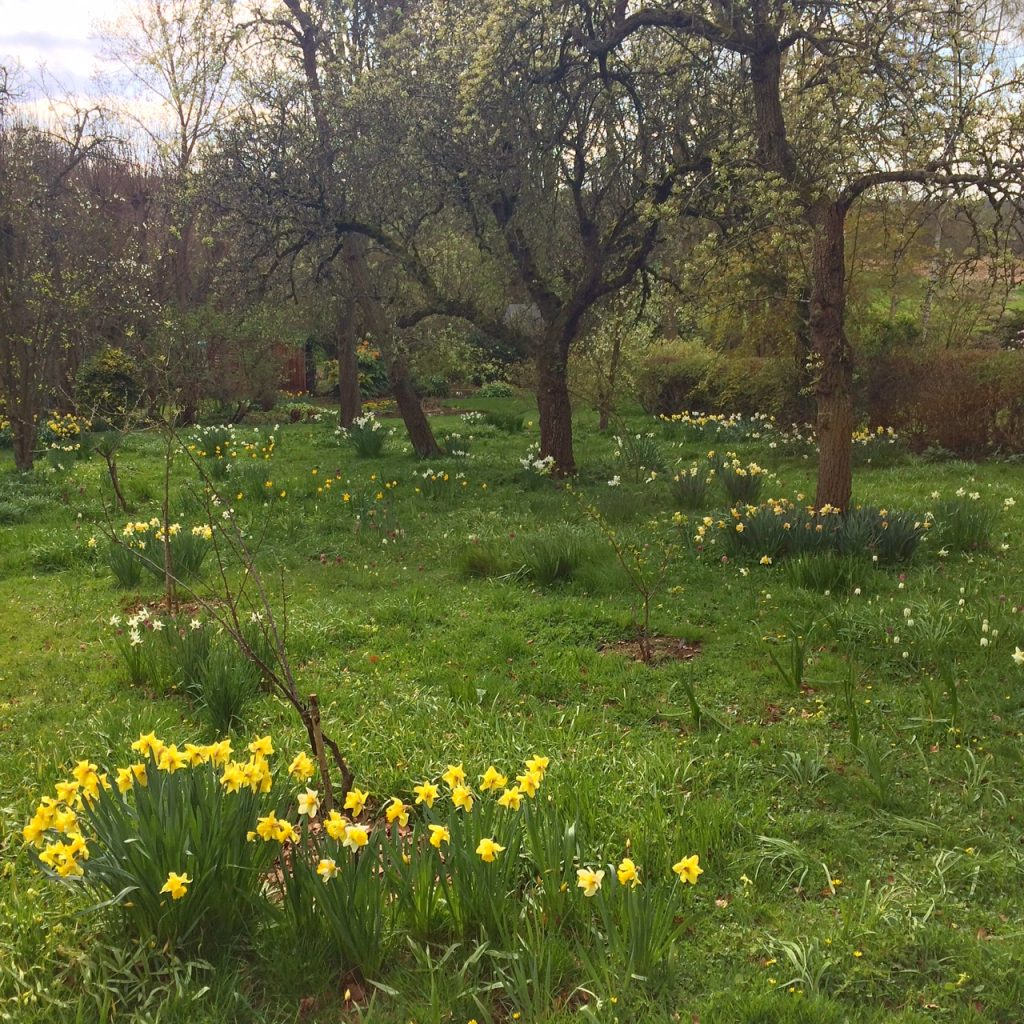 The orchard at Coton Manor