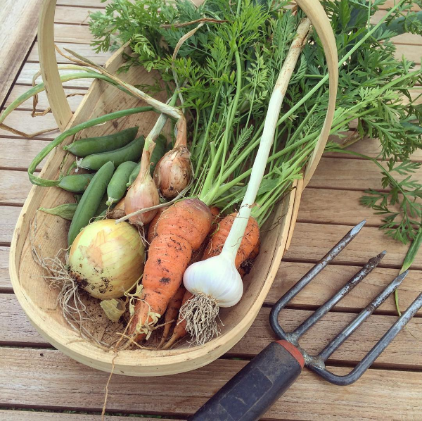 Vegetable Trug Gardening