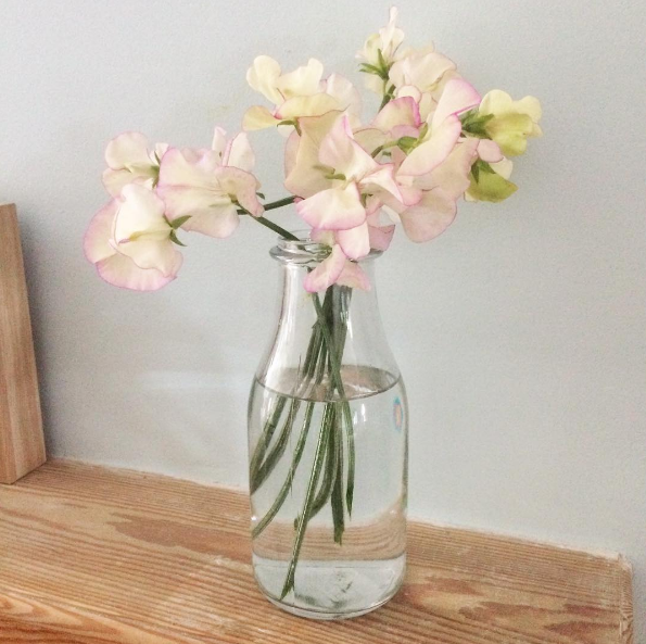Sweet peas in a small bottle vase