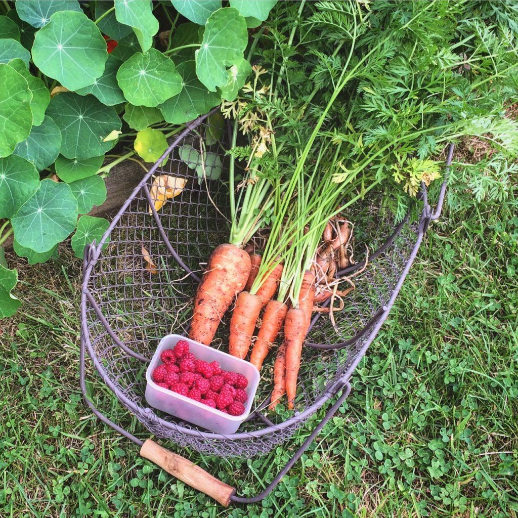 Garden rustic basket